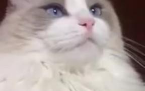 Cat Malfunctions When Teeth Brushed