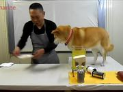 Dog Takes Over Cooking Show