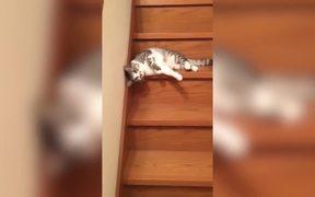 Laziest Cat Ever