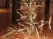 Moving Plants: Plant #1
