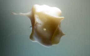 Abstract Crisp Melt Shapeshift