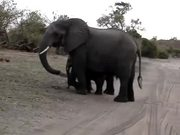 Baby Elephant Attack