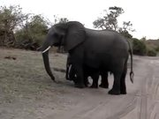 Baby Elephant Attack
