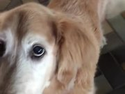 Dog Finds Out She Is Cancer Free
