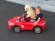 The Dog Is Steering