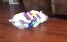 Bulldog Vs Life Vest
