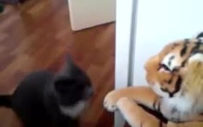 Cat Hates The Tiger Stuffed Animal