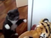 Cat Hates The Tiger Stuffed Animal
