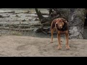 A Dog's Way Home International Trailer