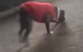 Dog Copying Cartwheels