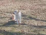 Dog On A Tight Leash