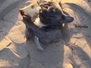 Dog Enjoying Some Time In The Sand