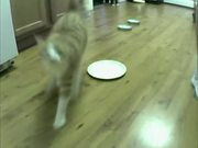 Cat Vs Automatic Feeder