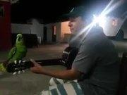 Parrot And Guitarist Duet