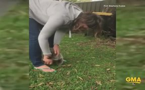 Baby Koala Gets A Little Excited