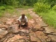 Releasing 285 Snakes At Once