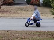 Large Man Driving A Mini Bike
