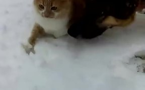 Dog Pushes Cats Face Into The Snow