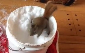 Squirrel Plays With Snow
