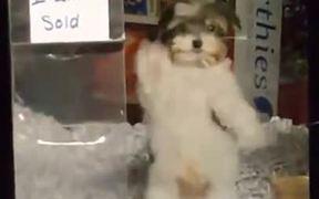 Sold Pupper Dance