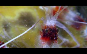 Wonders Of The Sea Trailer
