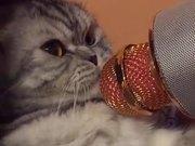 Cat In Mic