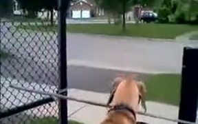 Big Stick Does Not Stop This Great Dane