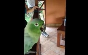 The Laughing Parrot