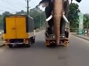Too Big To Be An Elephant Or An Actual Giant