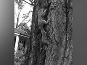Squirrel Rescue