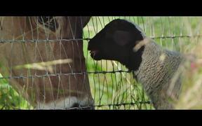The Biggest Little Farm Official Trailer