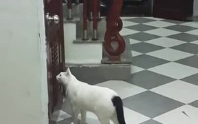 Cats are Smart