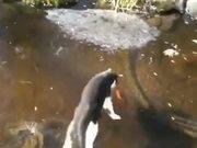 Kitty Running Hard