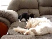 Kitten Playing With Sleeping Cat