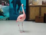 Pink Flamingo Robotic Dance Steps