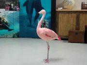 Pink Flamingo Robotic Dance Steps