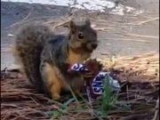 Squirrel Eating Sneakers