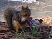 Squirrel Eating Sneakers