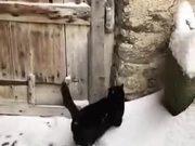 Feline Diving In The Snow