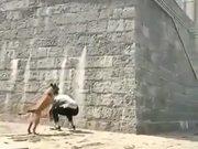 Spidy Dog