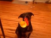 Dog Turns Trumpet King For A Treat