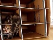 Cute Kittens Home Invasion
