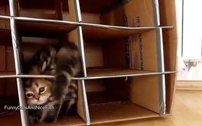Cute Kittens Home Invasion