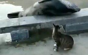 The Territorial Cat Gets Violent