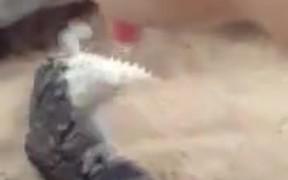 Adorable Lizard