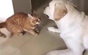 Cat Apologizing To The Dog