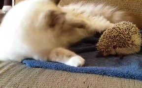 A Guide To Knowing Your Hedgehog