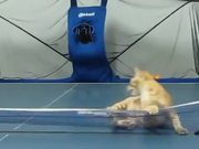Ping Pong With My Cat
