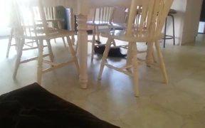 Crazy Cat Backsliding On The Floor