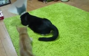 Kitten Harassing A Cat With Cone